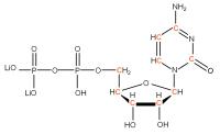 13C Cytidine 5'-diphosphate  lithium salt solution