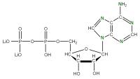 15N Adenosine 5'- diphosphate lithium salt  solution