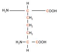 13C L-Diaminopimelic acid  powder