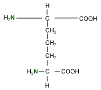 15N L-Diaminopimelic acid  powder